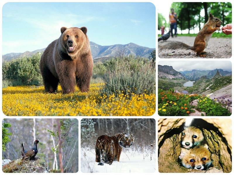 День заповедников и национальных парков 2017 - 11 января