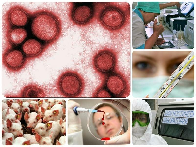 Симптомы свиного гриппа 2017 у детей и взрослых. Как лечить