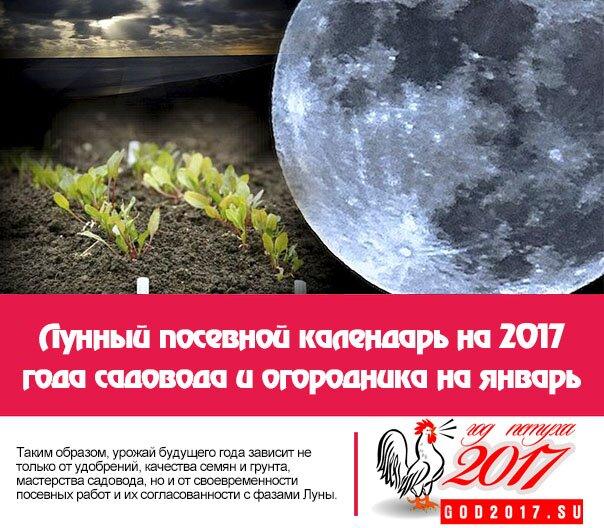 Лунный посевной календарь на 2017 года садовода и огородника на январь