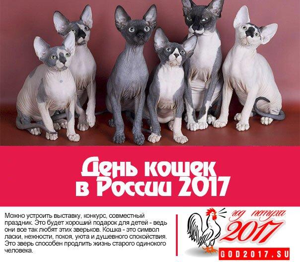 День кошек в России 2017