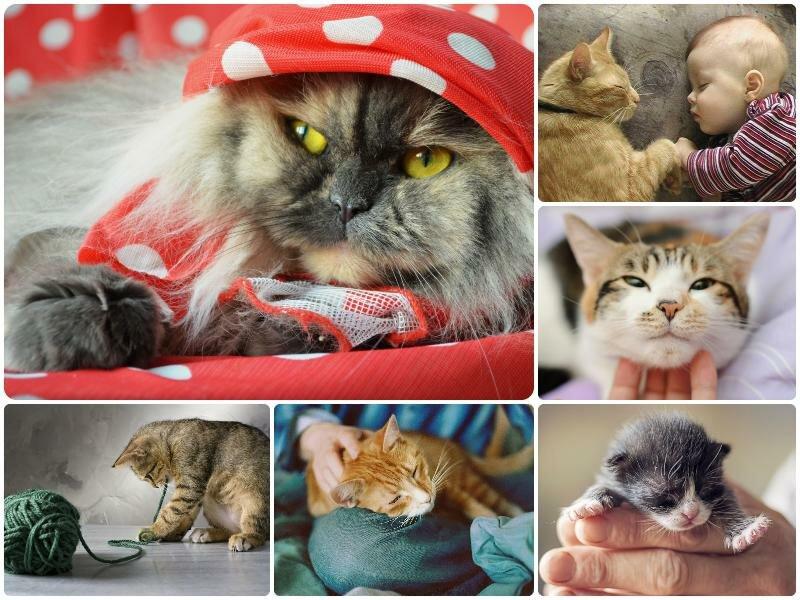 День кошек в России 2017. Какого числа
